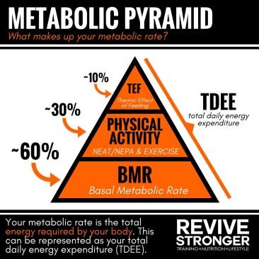 metabolic pyramid